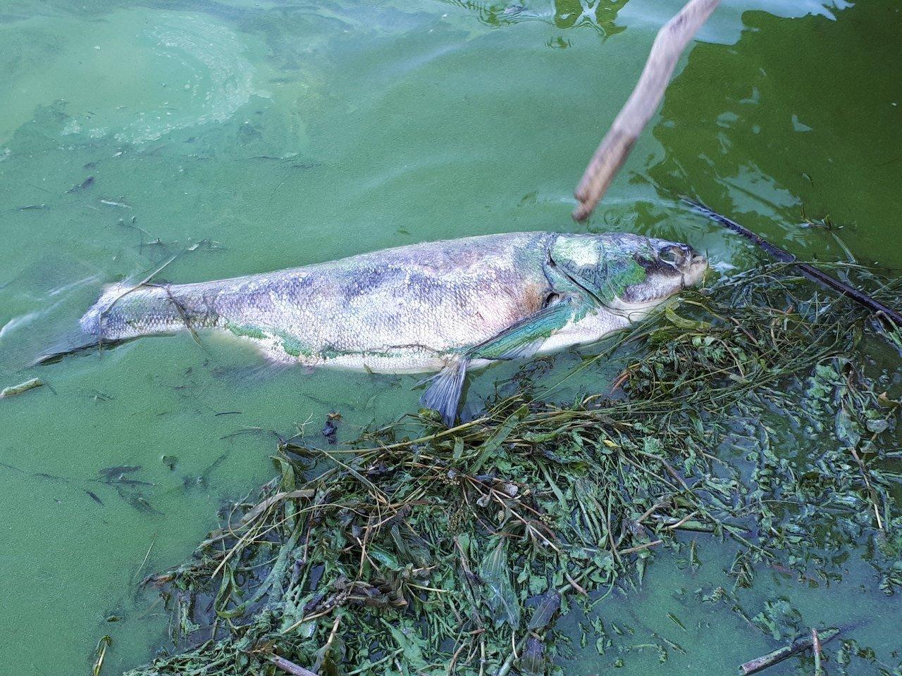 доверие фото рыбы реки днепр ремни тфилин