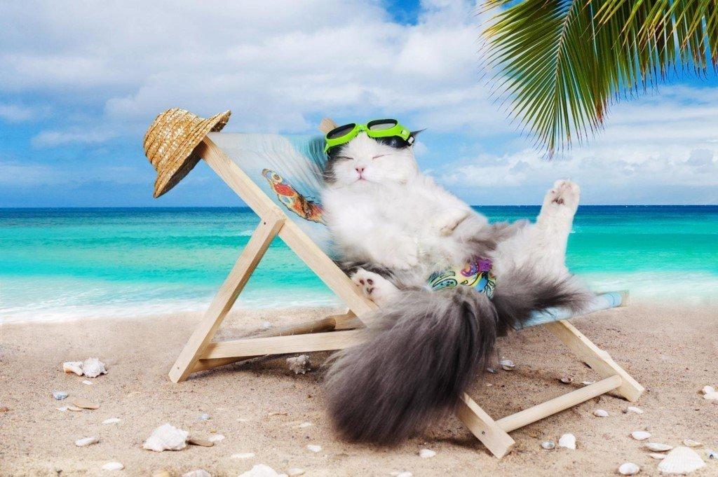 картинки с котами про отпуск кронос принял