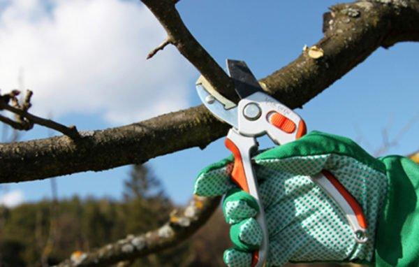 обрізка_дерева